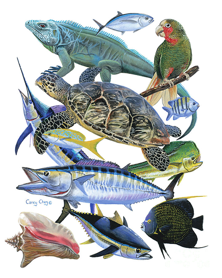 Iguana Painting - Cayman Collage by Carey Chen