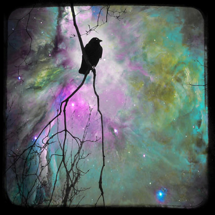 Celestial Dream Crow Photograph  - Celestial Dream Crow Fine Art Print