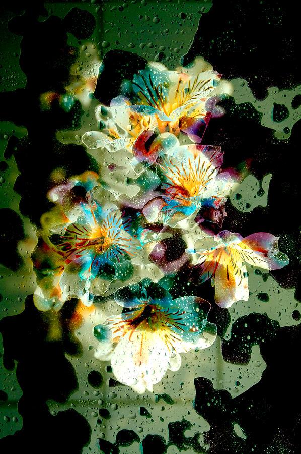 Celestial Flowers Photograph