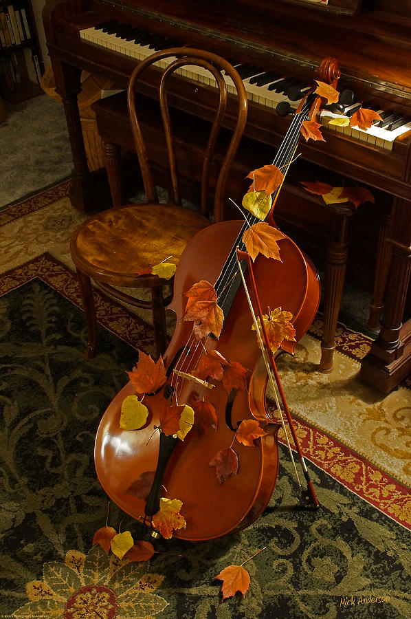 Cello Autumn 1 Photograph