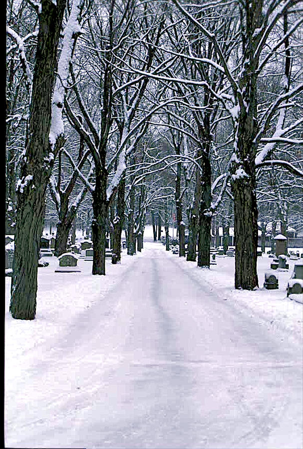 Cemetery  Trees   Snow Photograph - Cemetery In Snow by Gail Maloney