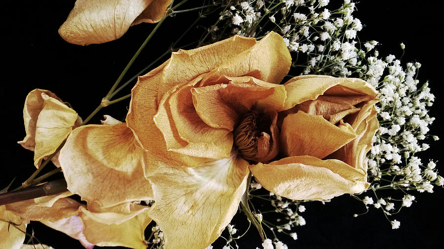 Rose Photograph - Centerpiece by Tanya Jacobson-Smith