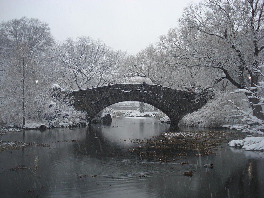 Central Park Ny Photograph  - Central Park Ny Fine Art Print