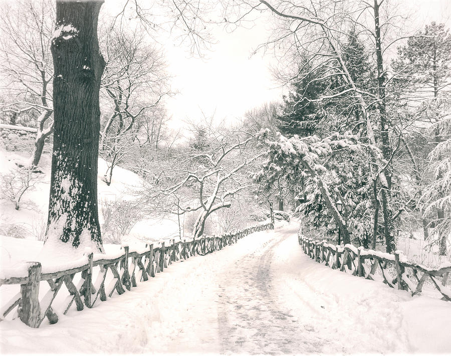 Central Park Winter Landscape Photograph
