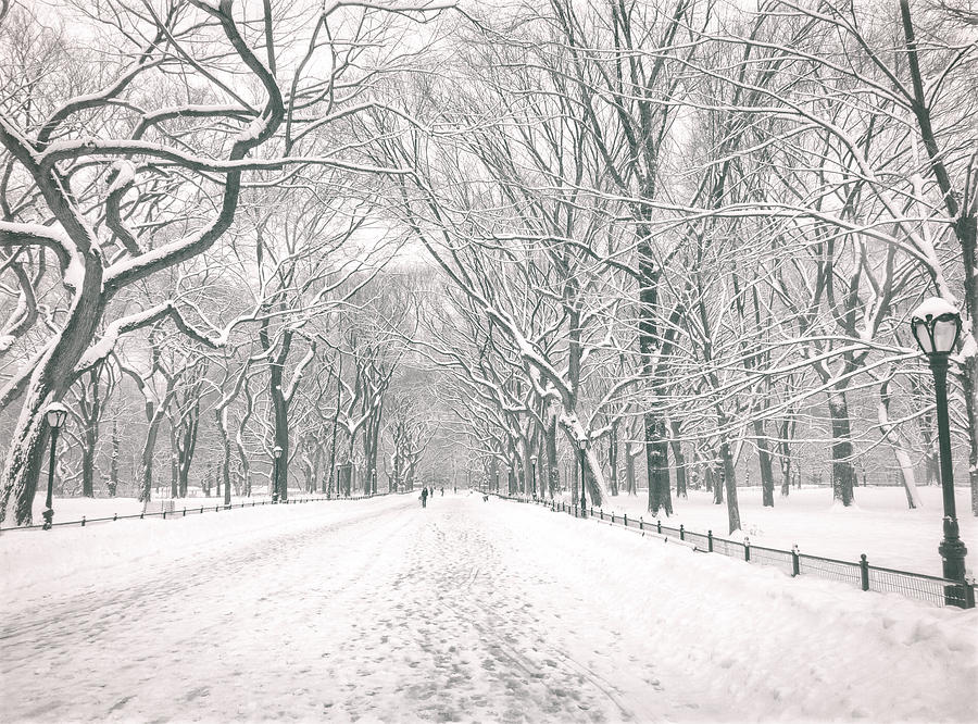 Central Park Winter - Poets Walk In The Snow - New York City Photograph