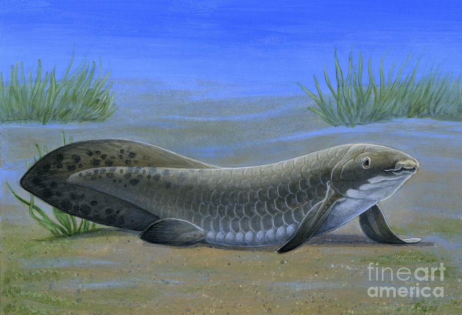Ceratodus, An Ancient Lungfish That by H. Kyoht Luterman