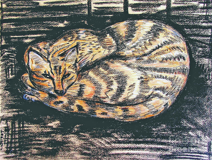Charcoal Tabby Drawing