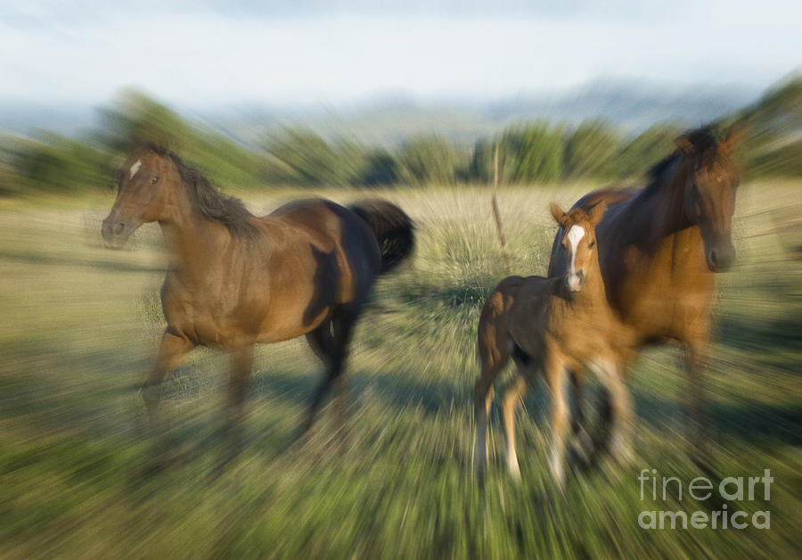 Charging Horses Photograph By Christopher Edmunds