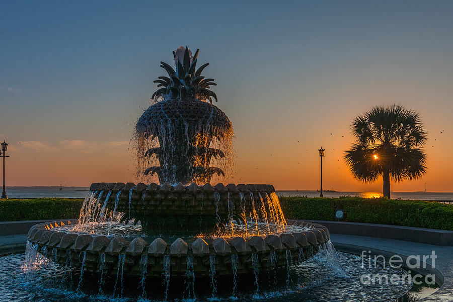 Charleston Pineapple Photograph