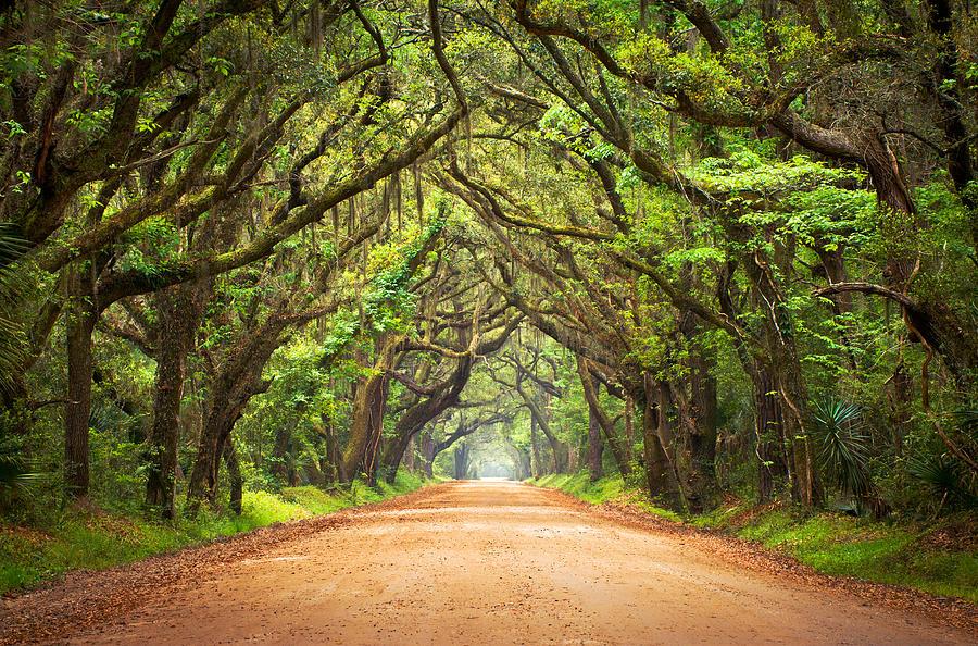 Charleston Sc Edisto Island - Botany Bay Road Photograph