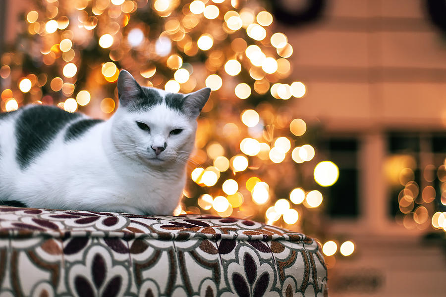 Charly And The Xmas Tree Photograph  - Charly And The Xmas Tree Fine Art Print