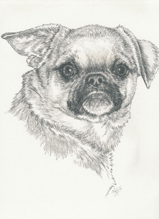 Designer Dog Drawing - Cheeky Cheeks by Barbara Keith