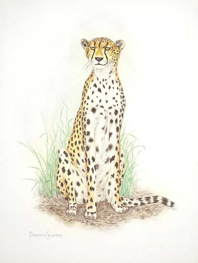 Cheetah Painting - Cheetah On Lookout by Dag Sla