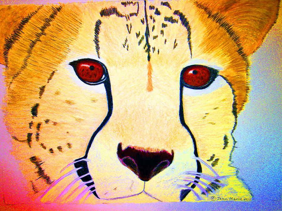 Cheetah With Color Drawing