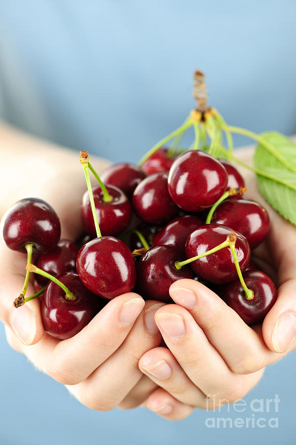 Cherries Photograph