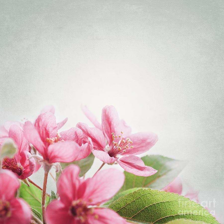 Cherry Pyrography - Cherry Blossom by Jelena Jovanovic