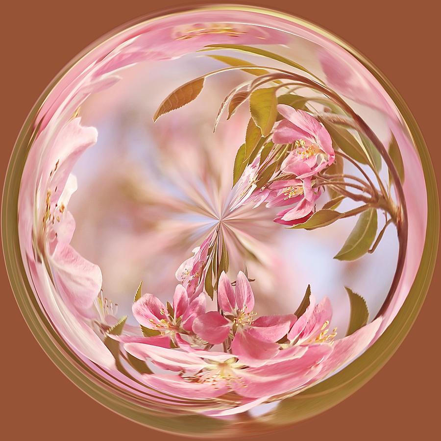 Orb Photograph - Cherry Blossom Orb by Kim Hojnacki