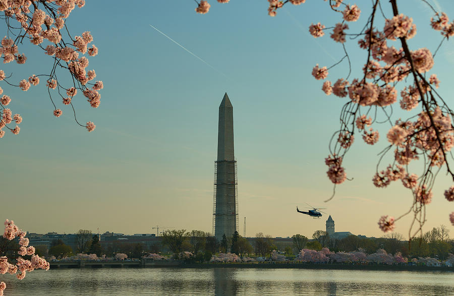 Architectural Photograph - Cherry Blossoms 2013 - 012 by Metro DC Photography