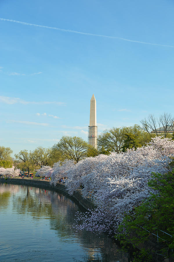 Architectural Photograph - Cherry Blossoms 2013 - 040 by Metro DC Photography