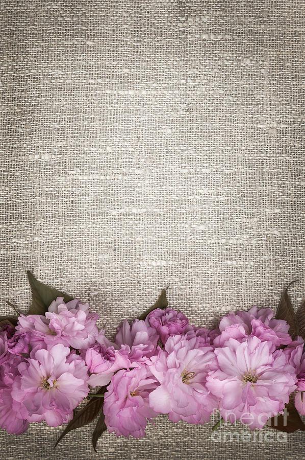Cherry Blossoms On Linen  Photograph