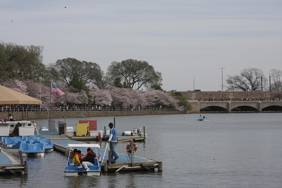 Cherry Blossoms - Washington Dc - 011327 Photograph