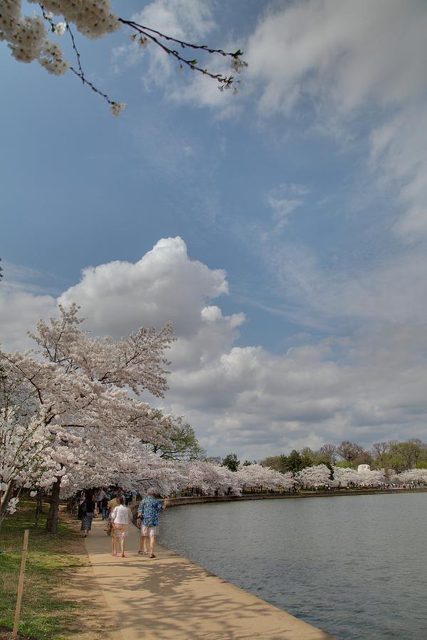 America Photograph - Cherry Blossoms - Washington Dc - 011370 by DC Photographer