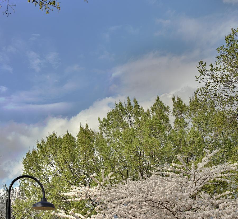 America Photograph - Cherry Blossoms - Washington Dc - 011385 by DC Photographer