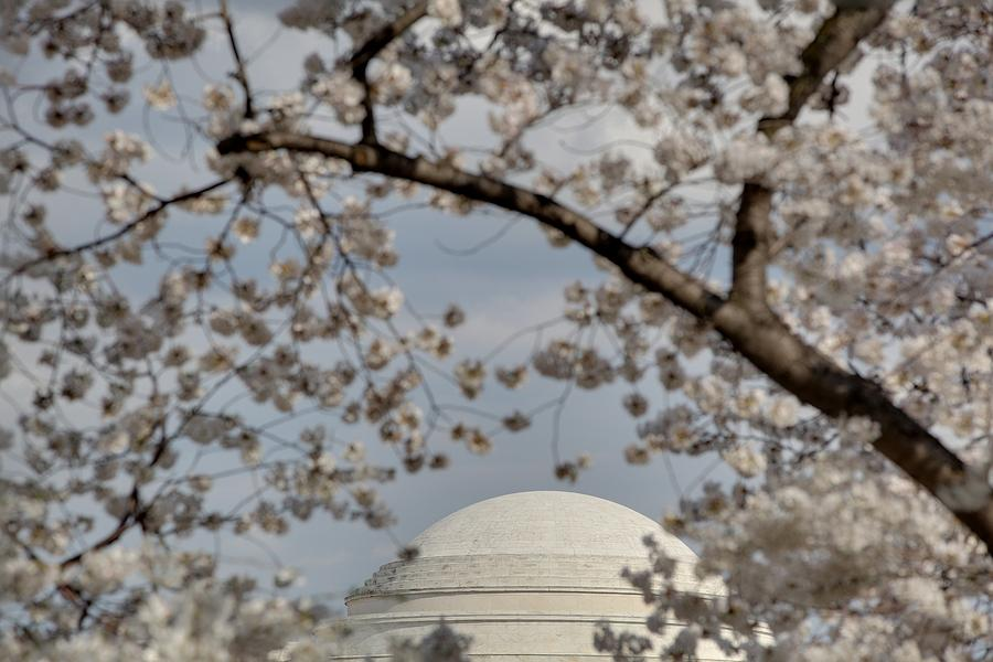America Photograph - Cherry Blossoms With Jefferson Memorial - Washington Dc - 011331 by DC Photographer