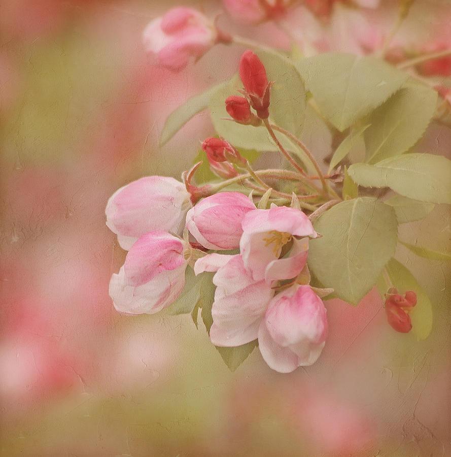 Flower Photograph - Cherry Buds by Kim Hojnacki
