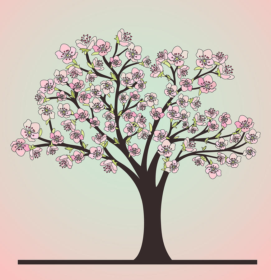 Cherry Tree With Blossoms Drawing