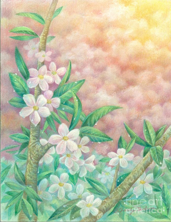 Floral Drawing - Cherryblossoms by Charity Goodwin