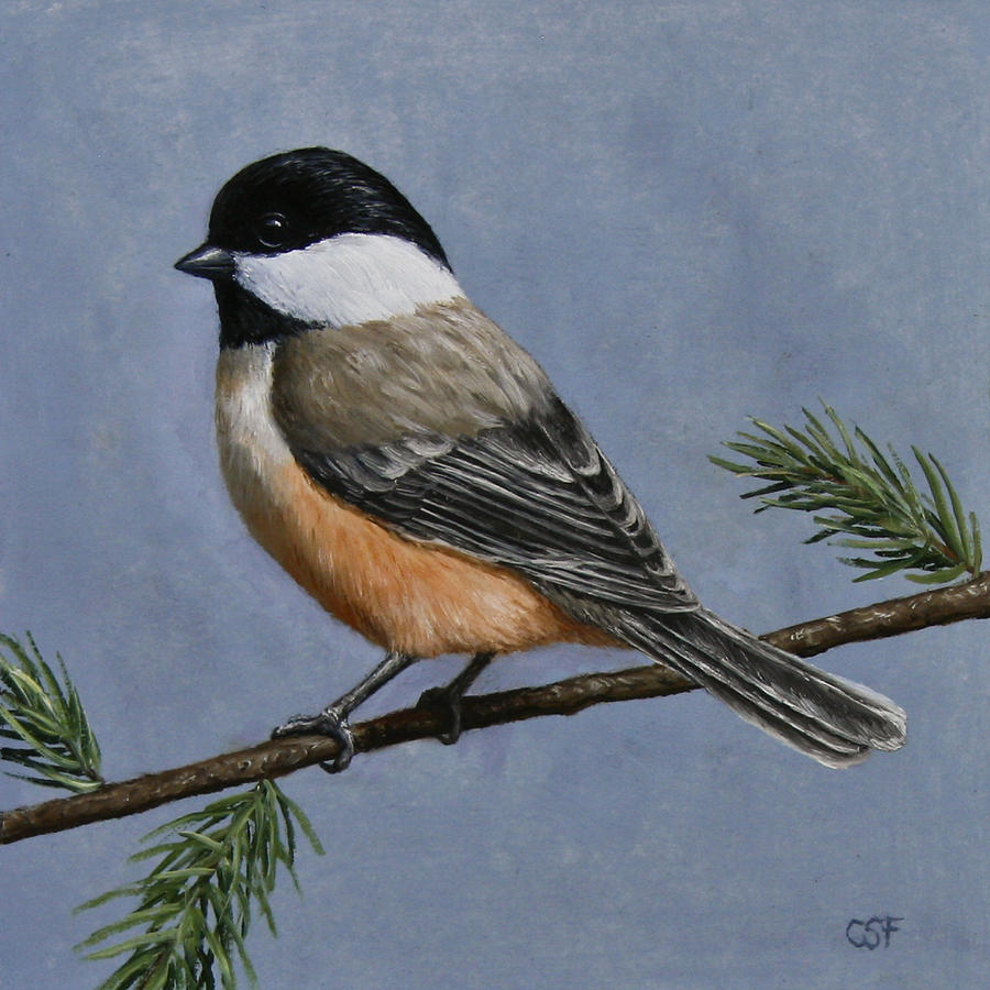 Bird Painting - Chickadee Charm by Crista Forest