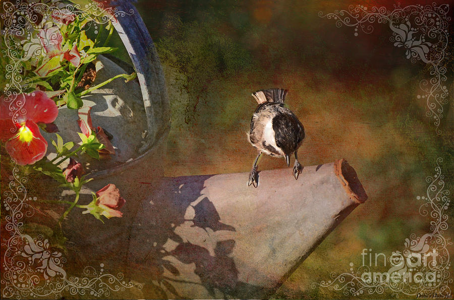 Chickadee Flower Pot Photograph  - Chickadee Flower Pot Fine Art Print