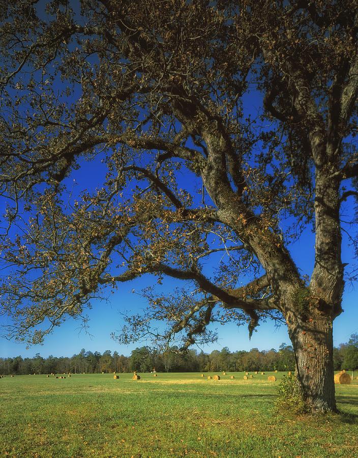 Chickamauga Battlefield Photograph