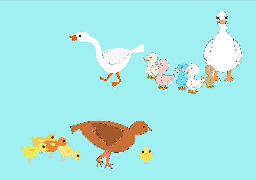 Chicks And Ducks Drawing  - Chicks And Ducks Fine Art Print