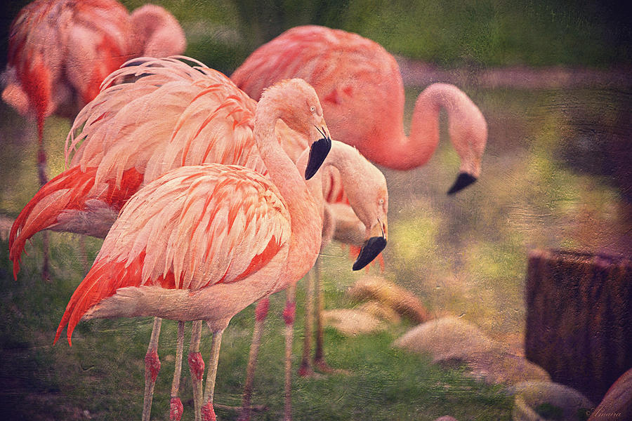 Wildlife Photograph - Chilean Flamingos  by Maria Angelica Maira