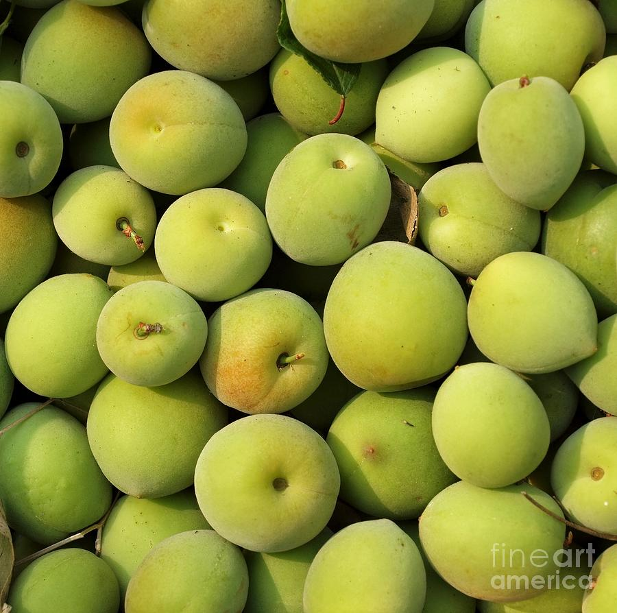 Chinese Green Plums Photograph