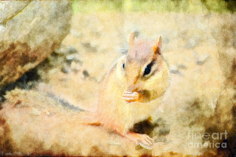 Chipmonk - Digital Paint II Photograph