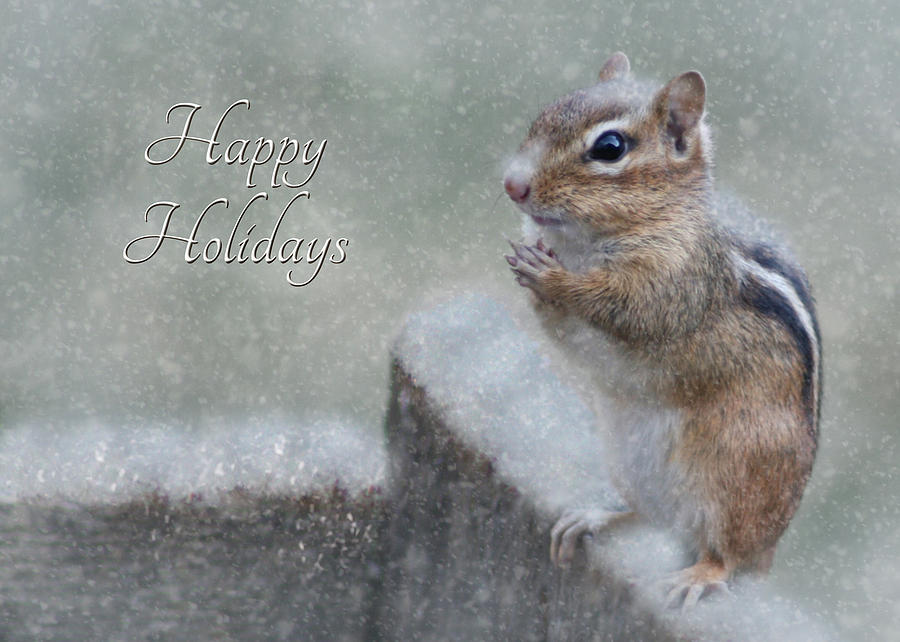 Chippy Photograph - Chippy Christmas Card by Lori Deiter