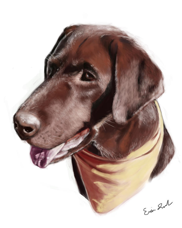 Chocolate Lab Digital Art