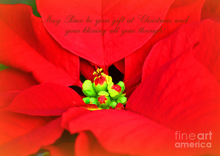 Christmas Blessing Photograph  - Christmas Blessing Fine Art Print
