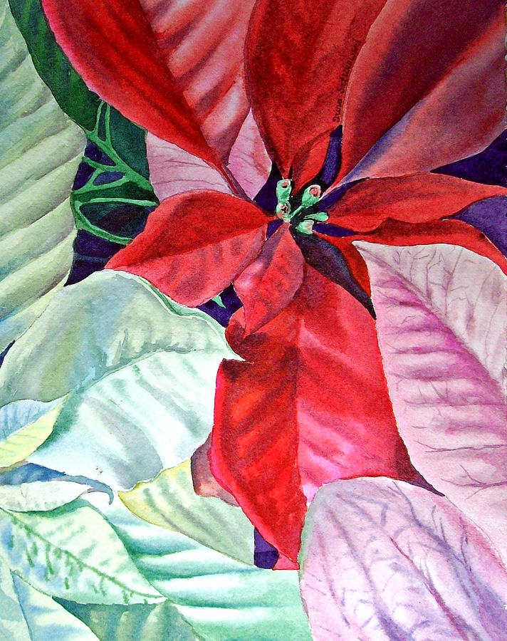 Christmas Poinsettia Painting  - Christmas Poinsettia Fine Art Print