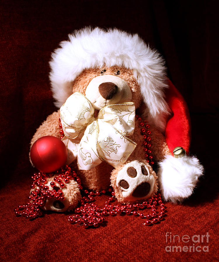 Christmas Teddy Photograph  - Christmas Teddy Fine Art Print