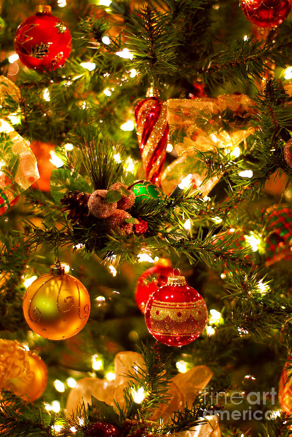 Christmas Photograph - Christmas Tree Background by Elena Elisseeva