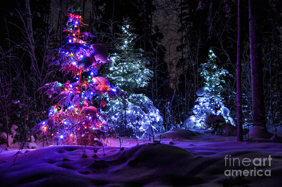 ... Tree Photograph - Christmas Tree Dark Winter Forest by Gary Whitton