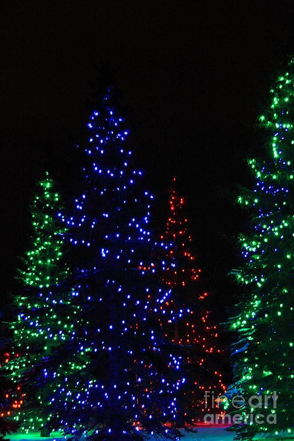 Christmas photograph christmas tree lights by helen bobis