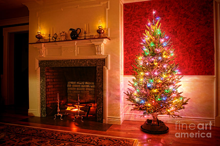 Christmas Tree Photograph - Christmas Tree by Olivier Le Queinec