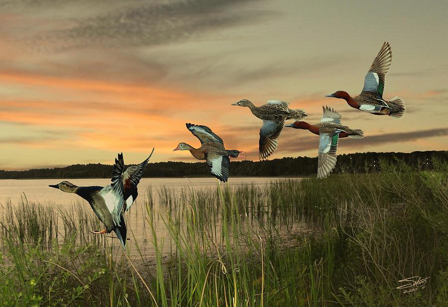 Ducks Digital Art - Cinnamon Teal Ducks At Dusk by Schwartz