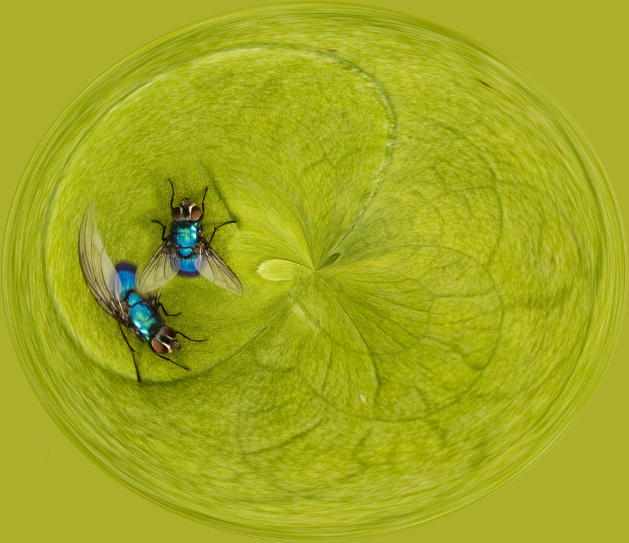 Color Photograph - Circle Of Flies by Jean Noren