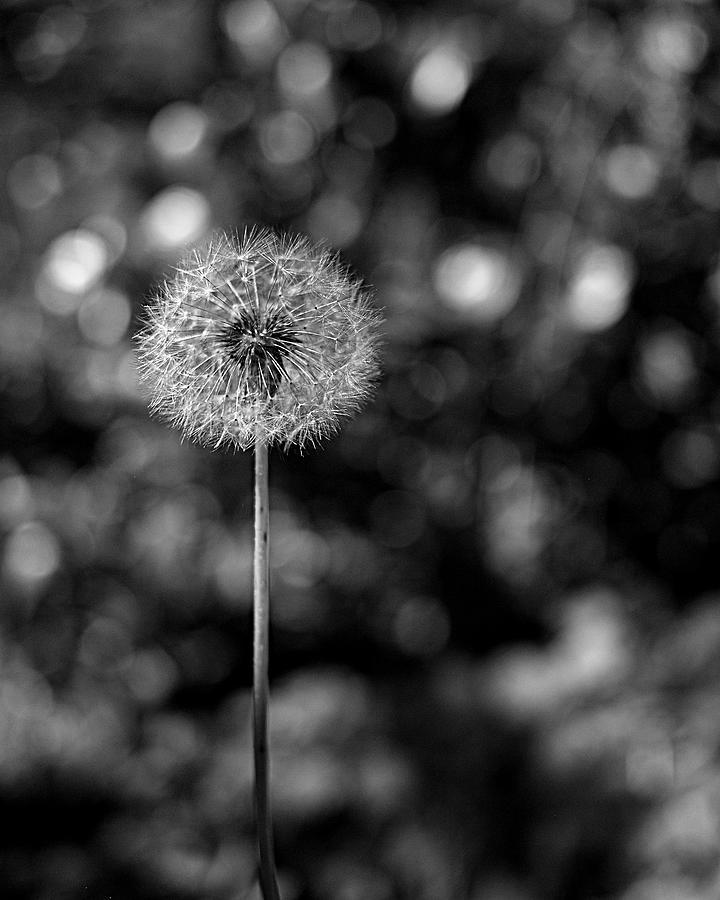 Circles Of Life Photograph